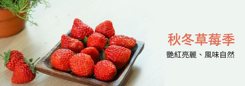 冬季酸甜風味草莓~季節販售中!