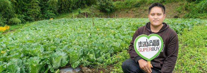 高山有機高麗菜|米露農場