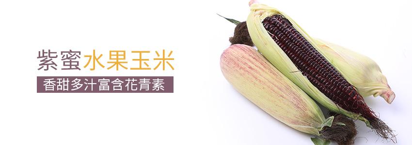 超熱銷紫蜜水果玉米,甜度高肉脆多汁,兩箱只要1020