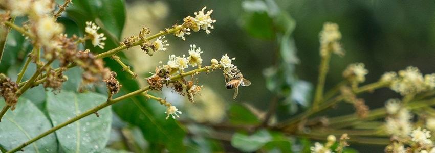 神農獎蜂蜜🐝 | 蜂巢氏 產地影片